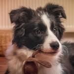 23|11|2013 – Zweiohrhund mit Keinohrhase