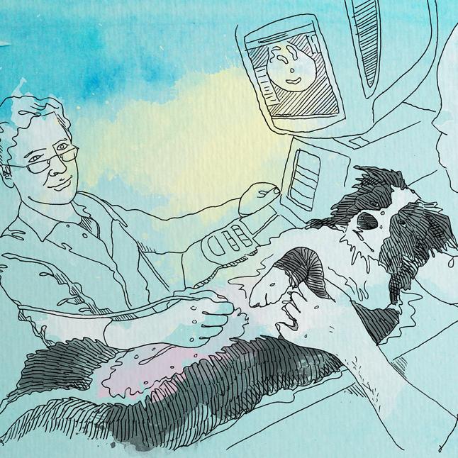 Huendin<em>Traechtigkeit</em>Ultraschall Kopie