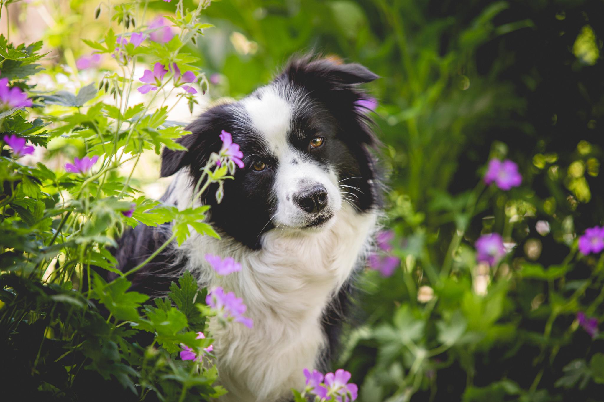 10|06|2016 – Nell im Garten