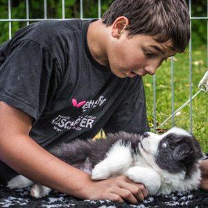 Kind mit einem Border Collie Welpen