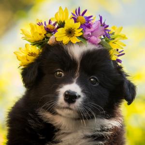 Welpe mit Blumenkranz