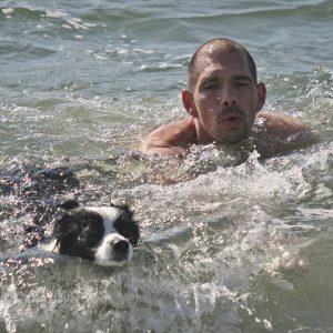Urlaub mit Hund in Dänemark, Border Collie schwimmt im Meer