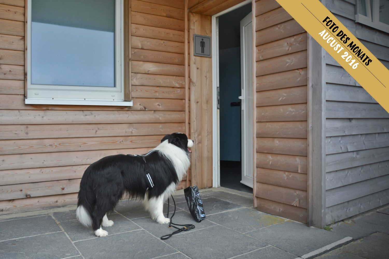 Border Collie Joey wartet vor öffentlicher Toilette