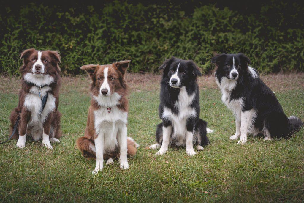 Spencer, Nana, Bounty und Zeppo