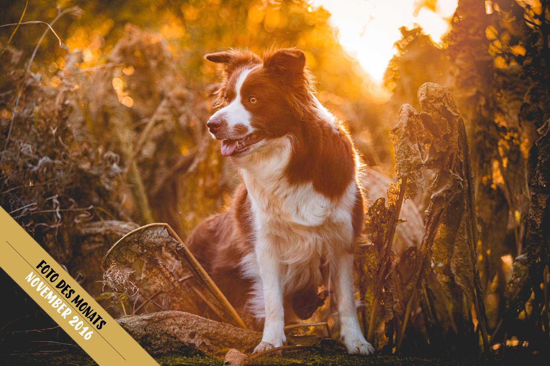 Herbst ist, wenn alle Hunde braun werden: Edda (Broadmeadows Almost Rosey)