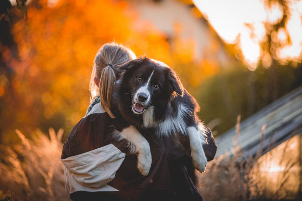Border Collie Bounty (Broadmeadows Dressed for Success)