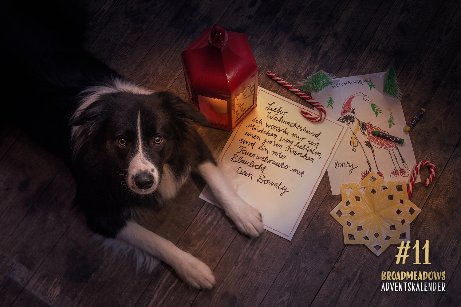 Broadmeadows Border Collies Adventskalender – No. 11: »Bounty« (Broadmeadows Dressed for Success)