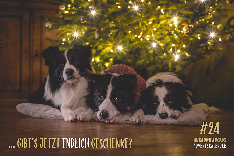 Broadmeadows Border Collies Adventskalender – No. 24: Wir wünschen frohe Feiertage!