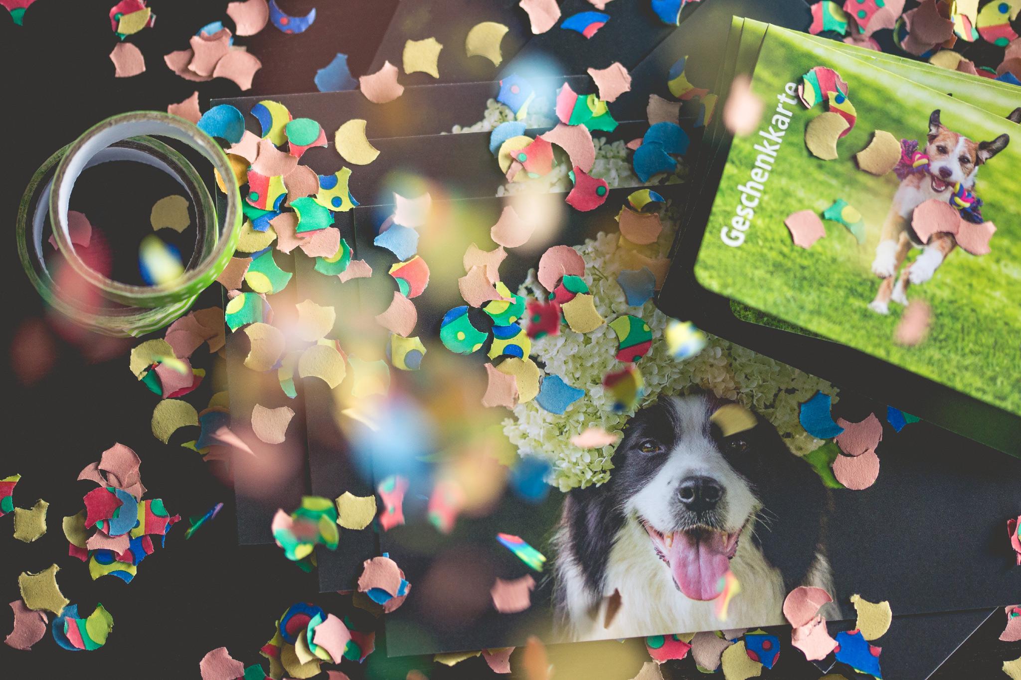 Alles für den Hund: sechs mal Geburtstag, sechs mal Geschenke