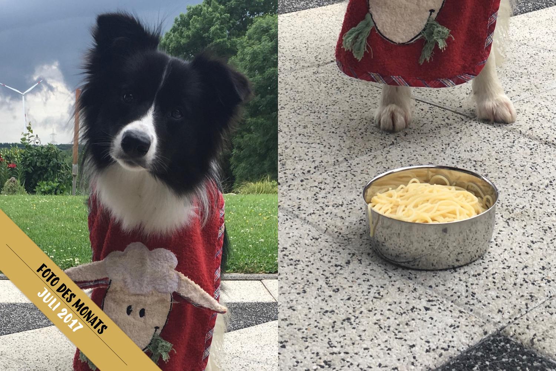 Foto des Monats: Ellie (Broadmeadows Celebrity Skin) liebt Spaghetti