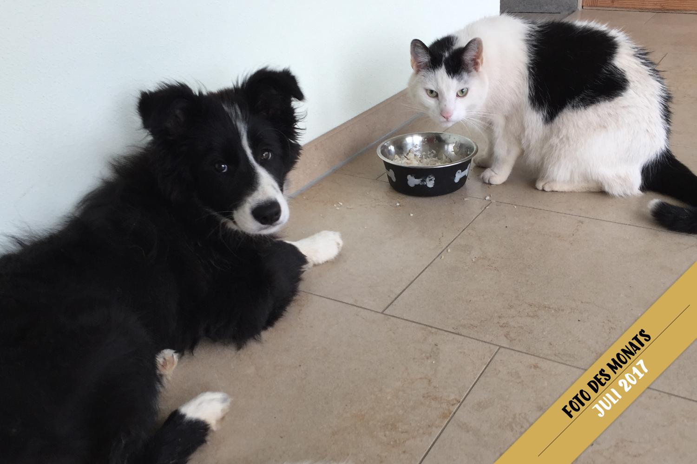 Foto des Monats: Jill (Broadmeadows Edge of Glory) – Was der Katze schmeckt, kann so schlecht nicht sein …