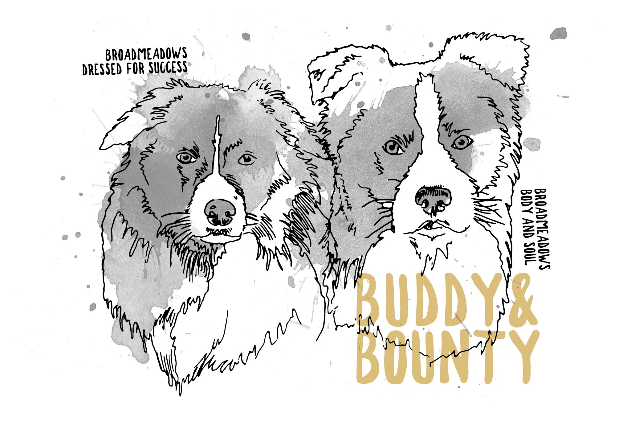 Illustration Border Collie Rüden