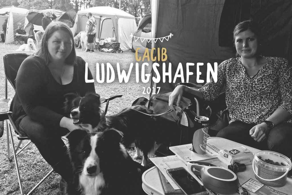 13 08 2017 – Ellie und Crazy auf der CACIB Ludwigshafen