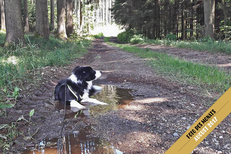 Foto des Monats: Ella (Broadmeadows Euphoria) – jeder Waldweg ein Schwimmbad