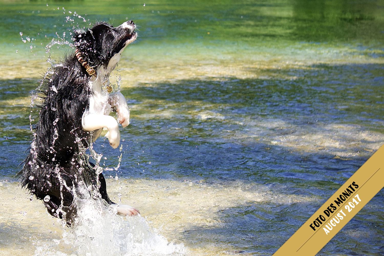 Foto des Monats: Ellie (Broadmeadows Celebrity Skin) – Wassertreten in Kroatien