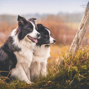 30|10|2017 – Ida und Heidi