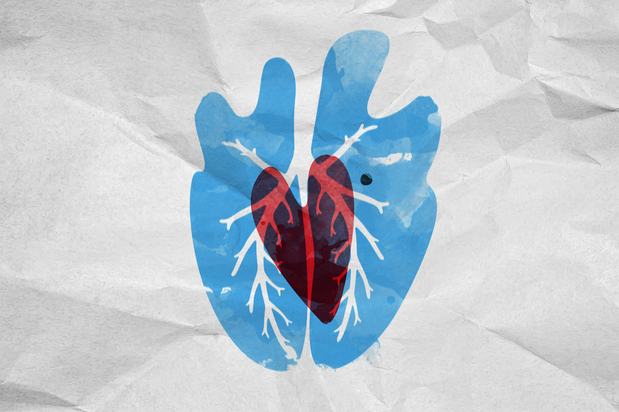 Herz und Lunge – und das kleine, schwarze Etwas dazwischen