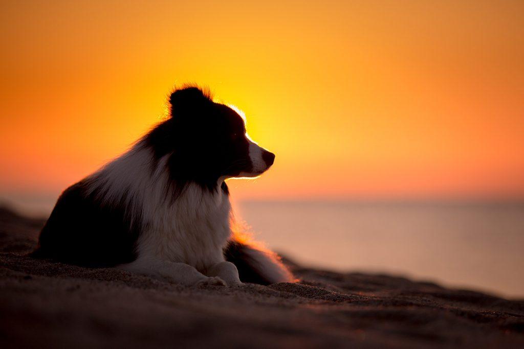 12|05|2018 – Sonnenaufgang am Spiaggia di Osalla
