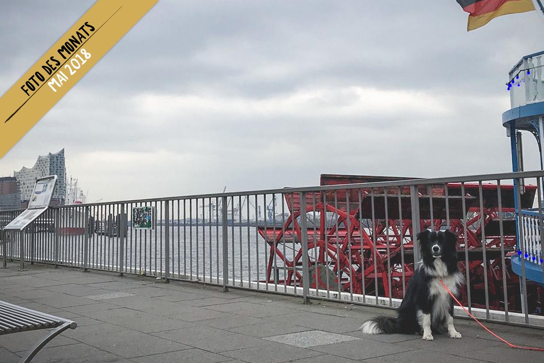 Foto des Monats: Bran (Broadmeadows Cloud Rider) im Hamburger Hafen