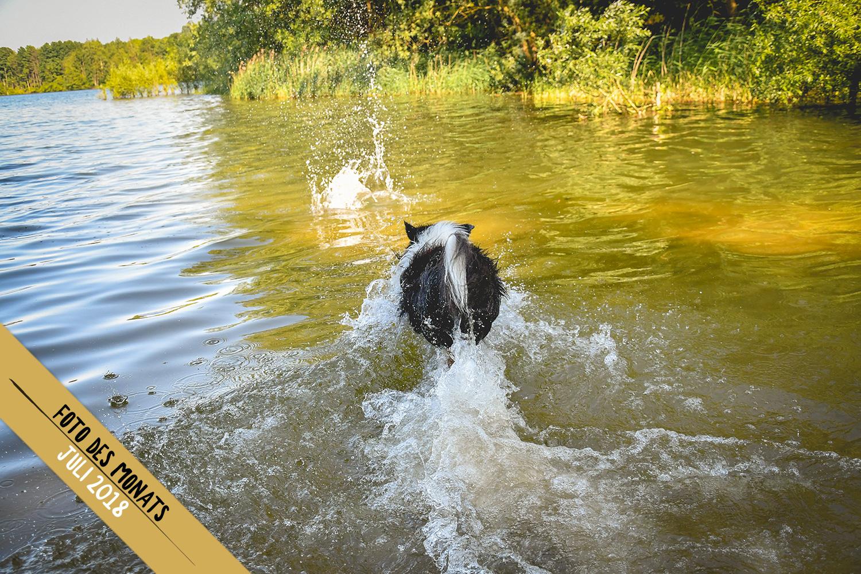 Ob der Ball auch schwimmen kann: Joey (Broadmeadows Black Diamond)