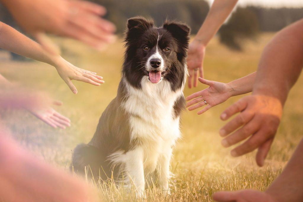 Die zweite Trächtigkeitswoche und was Hund will: Hände, Hände und noch mehr Hände