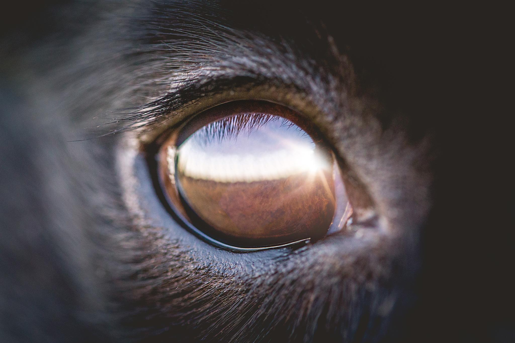 Die dritte Trächtigkeitswoche: Was blitzt da in Ellies Augen?
