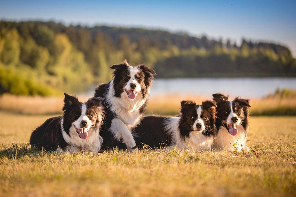 02|07|2018 – Ida, Nell, Heidi und Zion