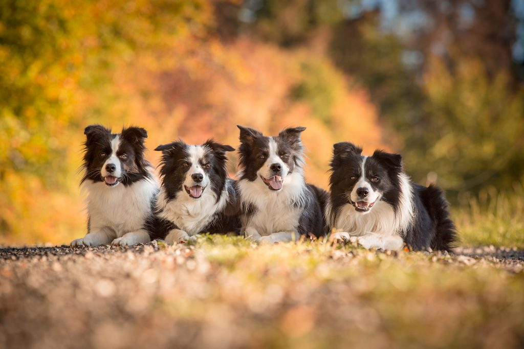 27|09|2018 – Unsere Border Collies
