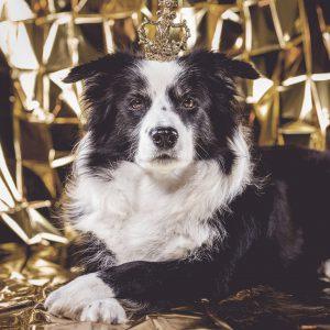 13|11|2018 – Auch Mama Nell wünscht ihren Goldjungs und -mädchen nur das Beste!