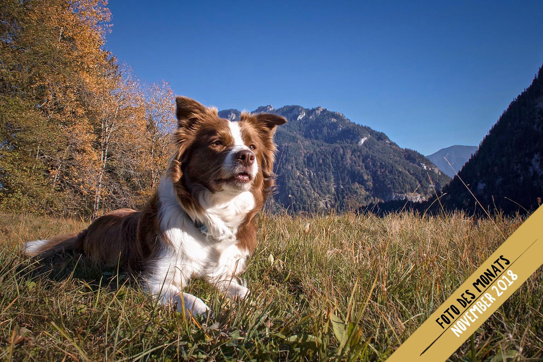 Herbstfeuer: Edda (Broadmeadows Almost Rosey)