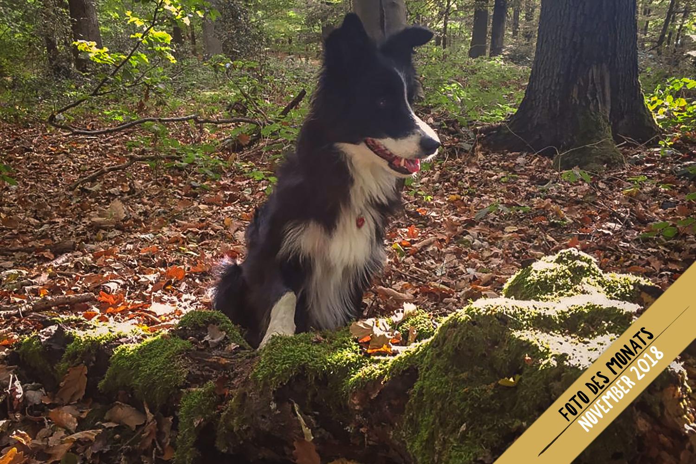 Herbstfreuden: Jill (Broadmeadows Edge of Glory)