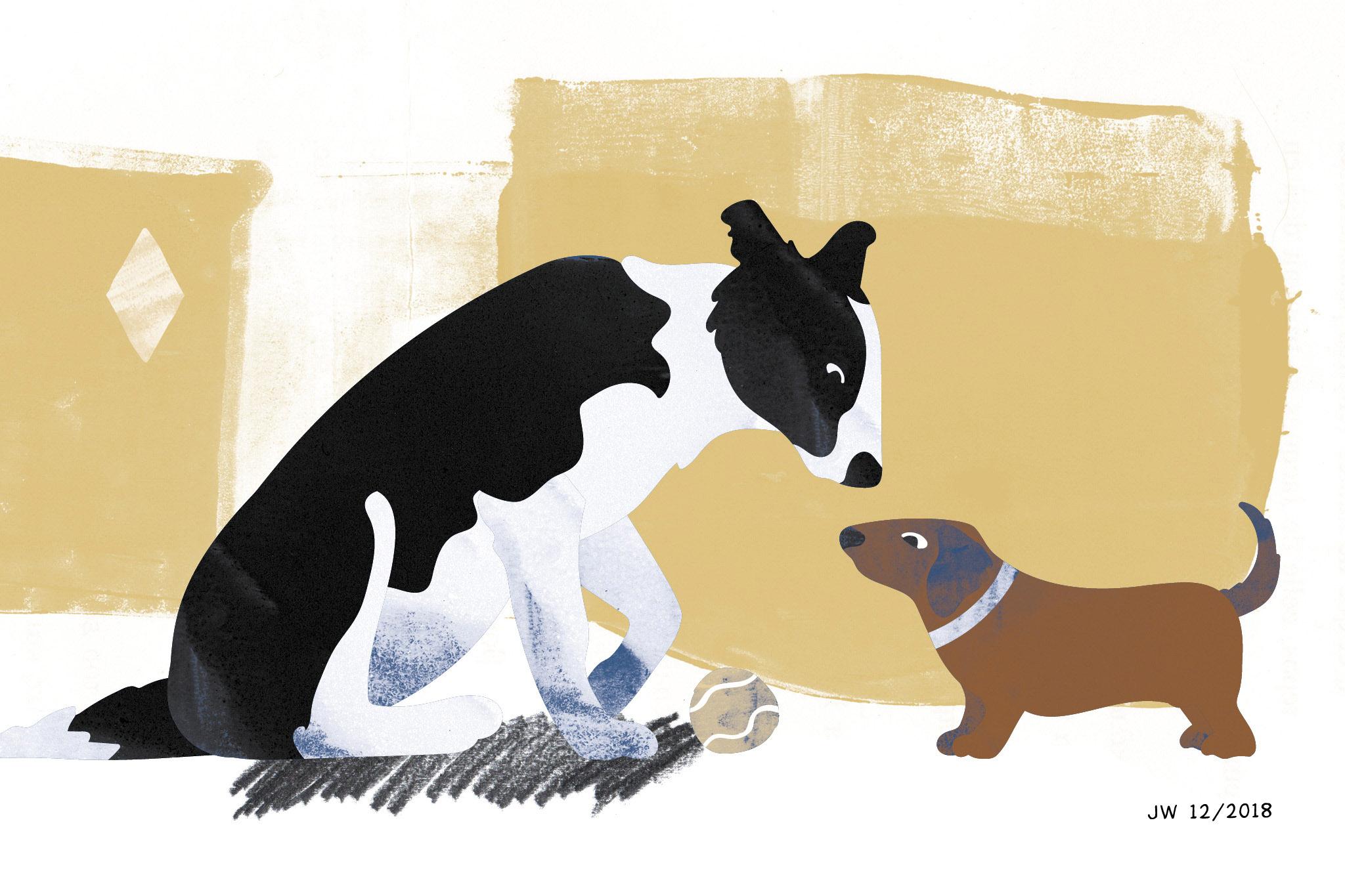 Hundeillustrationen (Border Collies) zu einer Weihnachtsgeschichte