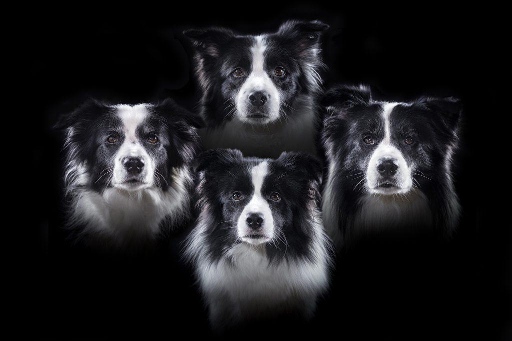 Woof-emian Rhapsody, oder: gleich vier Stimmen auf einmal