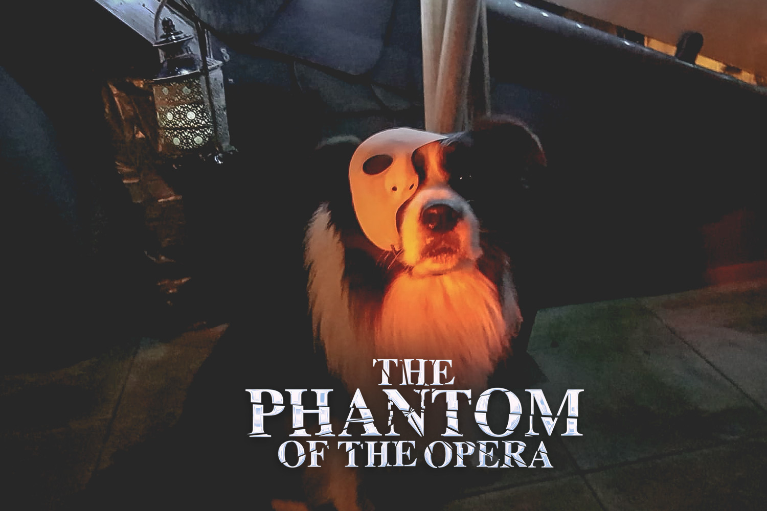 Buddy (CH Broadmeadows Body and Soul) als »Phantom der Oper«
