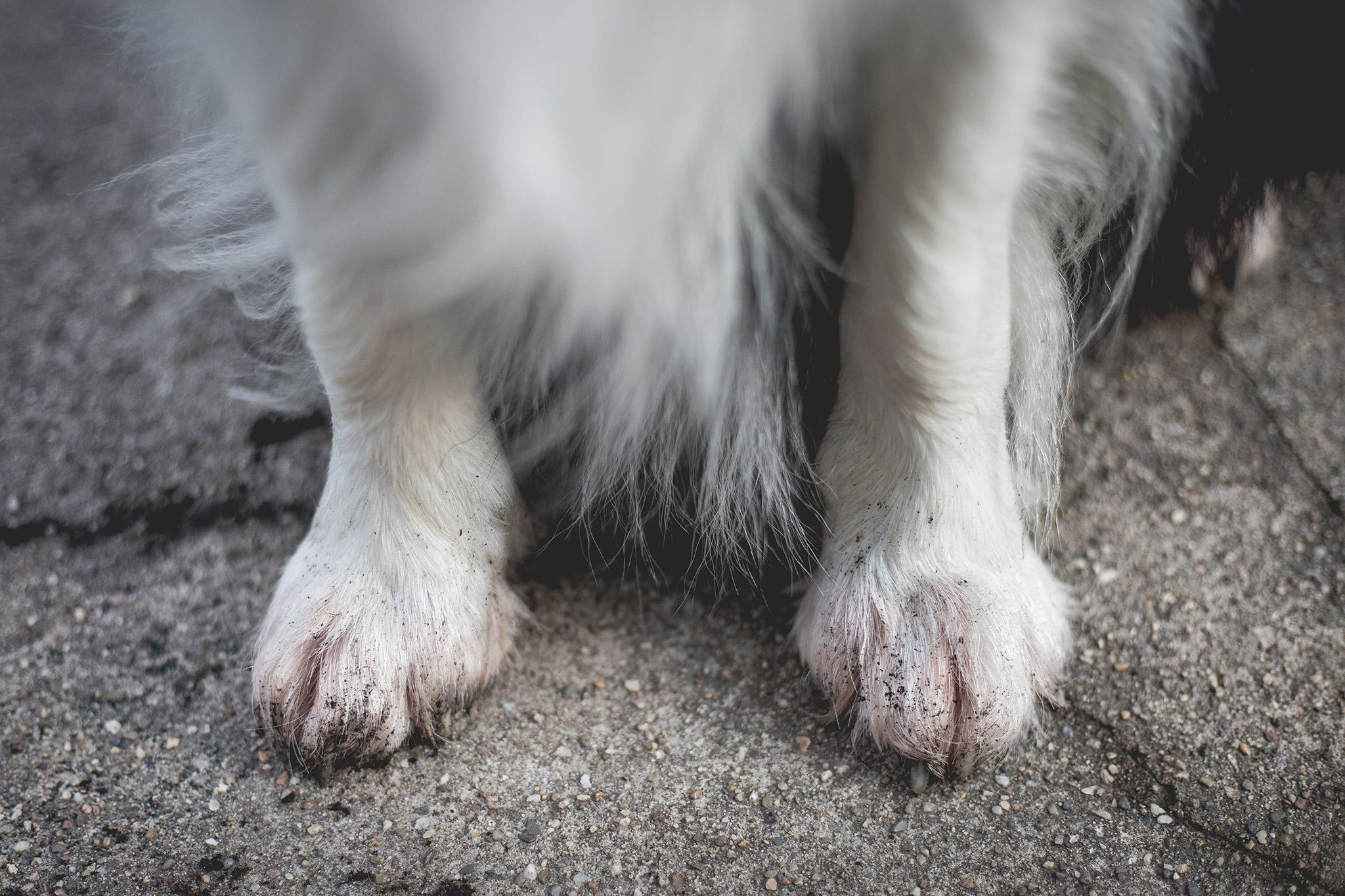 22|05|2019 – Wurfkiste? Och nö … dann doch lieber 'ne eigene Wurfhöhle graben …