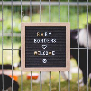 Tafel am Gitter des Welpenauslaufs eines Border Collie Züchters