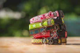Welpenhalsbänder für fünf Border Collie Welpen, hergestellt von Boos Kleiner Shop