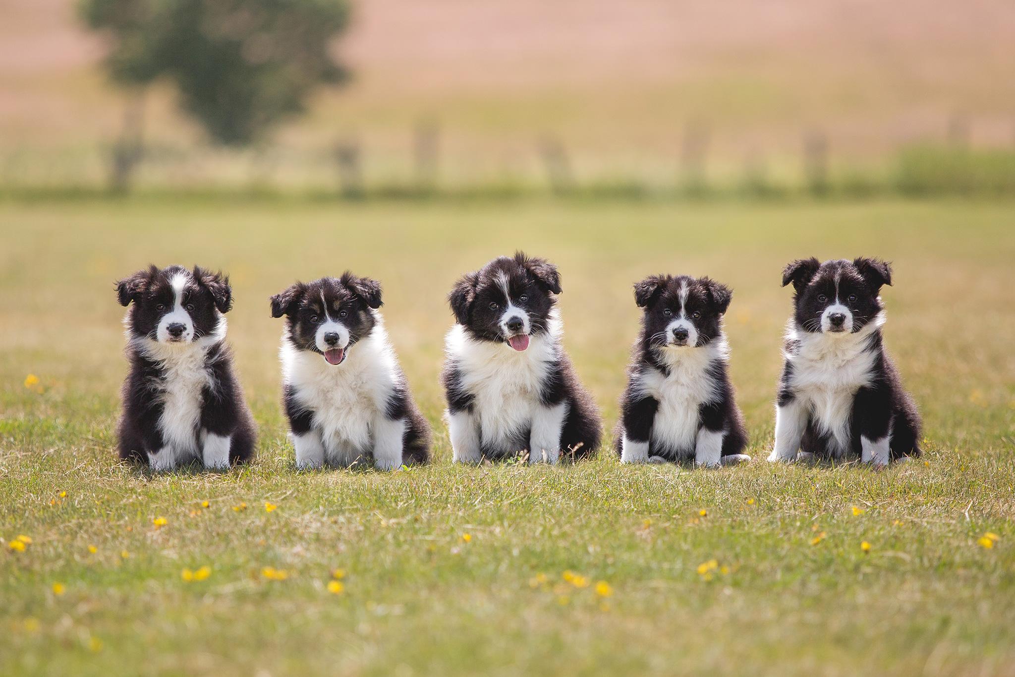 11|07|2019 – Unser F-Wurf: Quinn, Fellow, Finn, Molly und Sissi