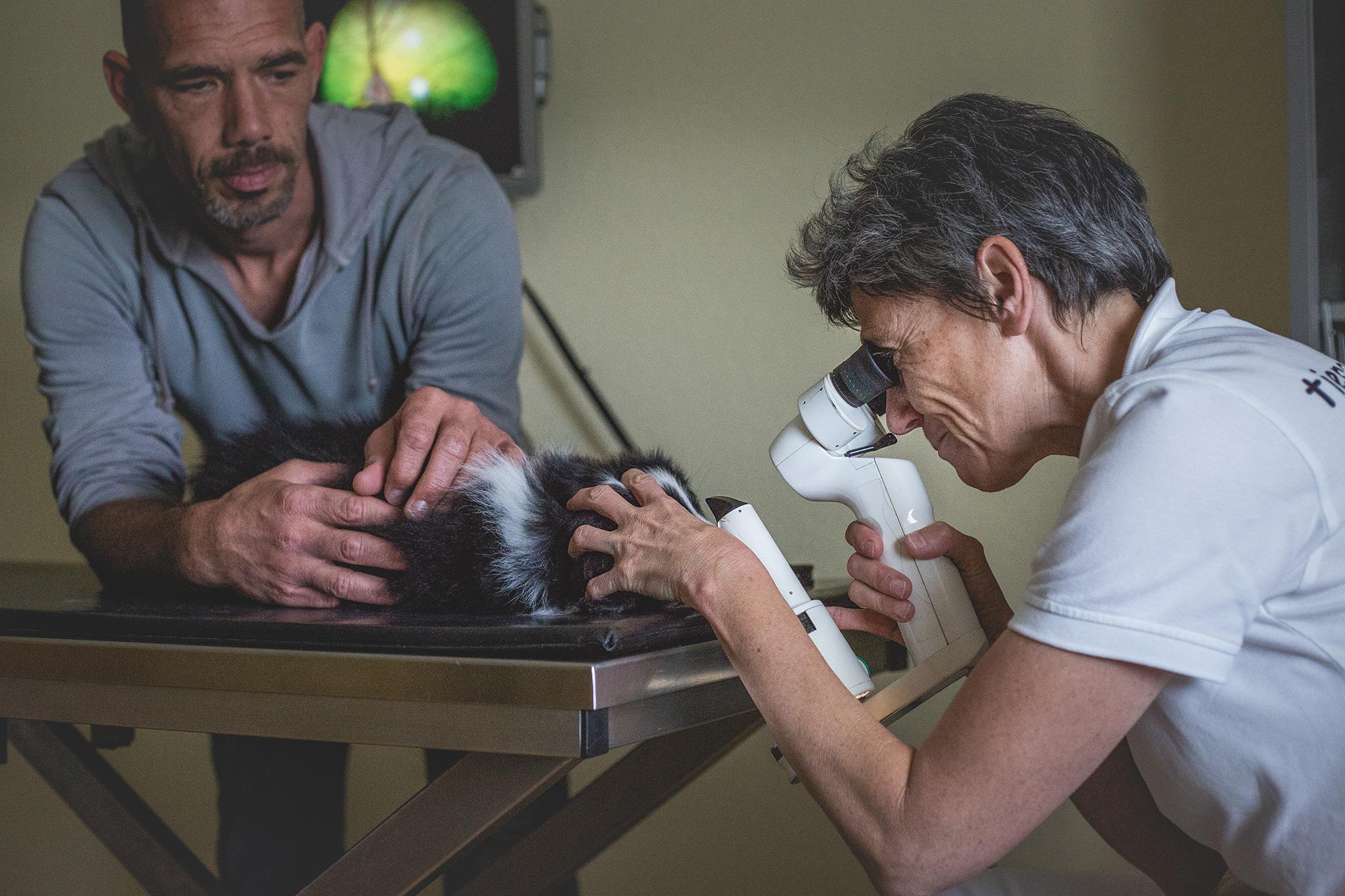 Augenuntersuchung bei einem Border Collie Welpen durch Dr. Nina Koch vom Tieraugenzentrum in Pohlheim