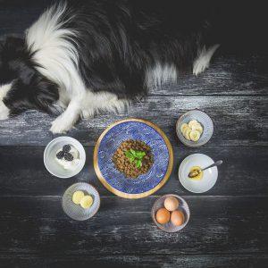 Studioaufnahme zur Ernährung der trächtigen Hündin mit Quark, Eiern, Harzer Käse, Brombeeren, Honig, Banane und Platinum Welpenfutter