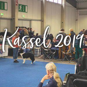 Hundeausstellung in Kassel im Dezember 2019, Border Collie im Ausstellungsring