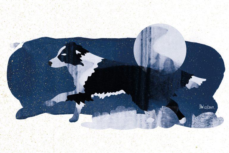 Border Collie, Weihnachtsmärchen, Illustration: Johannes Willwacher