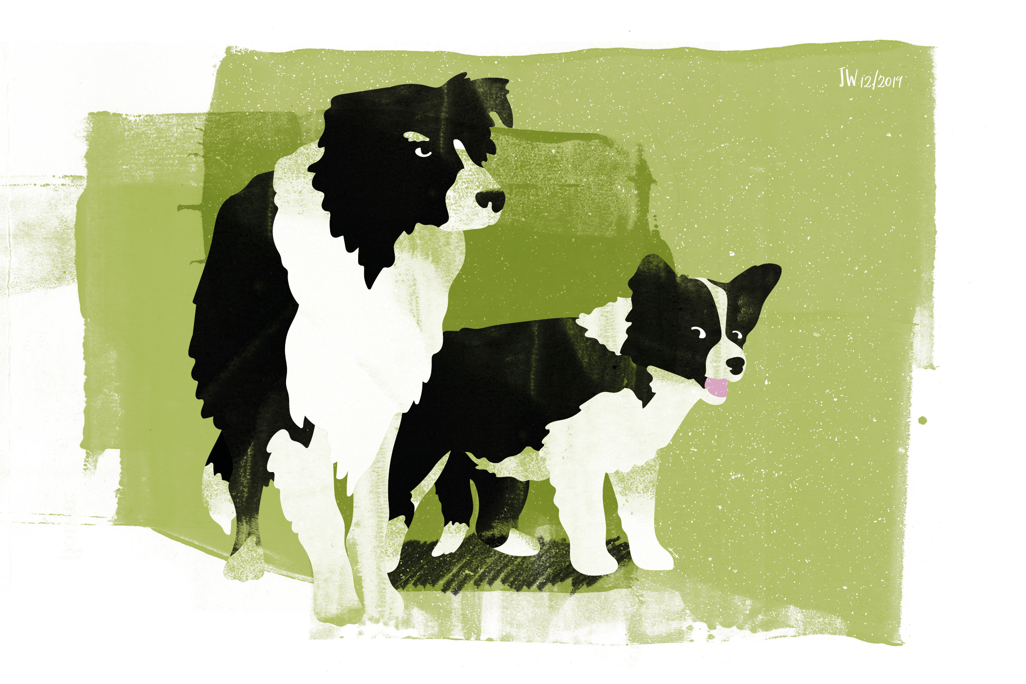 Border Collie, Weihnachtsmärchen, Illustration: Johannes Willwacher