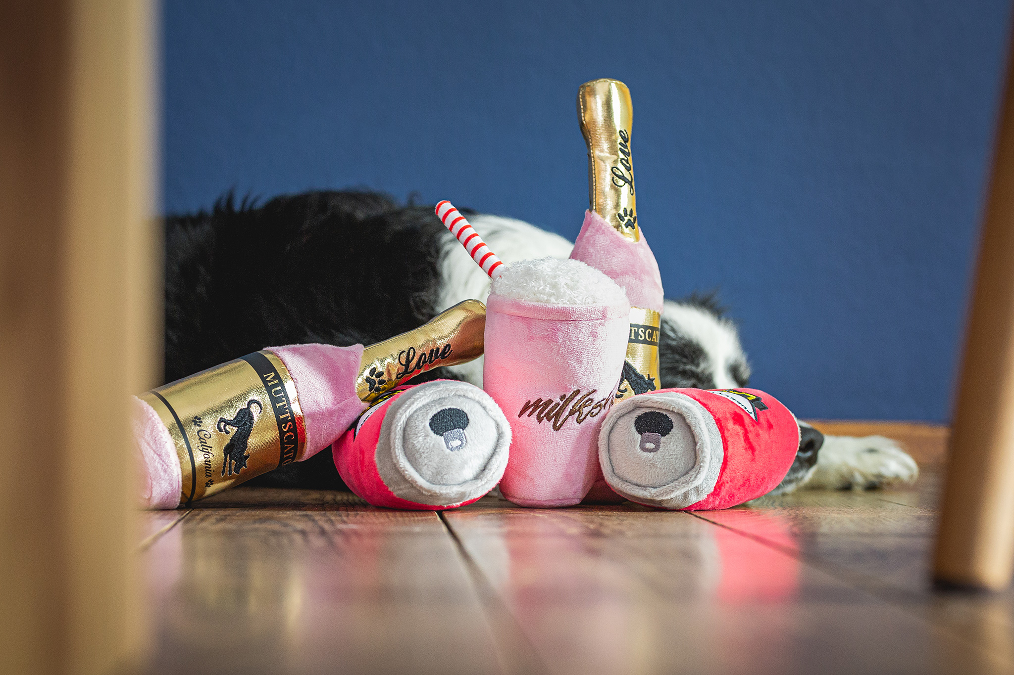 Hund mit Spielzeugen zum Geburtstag