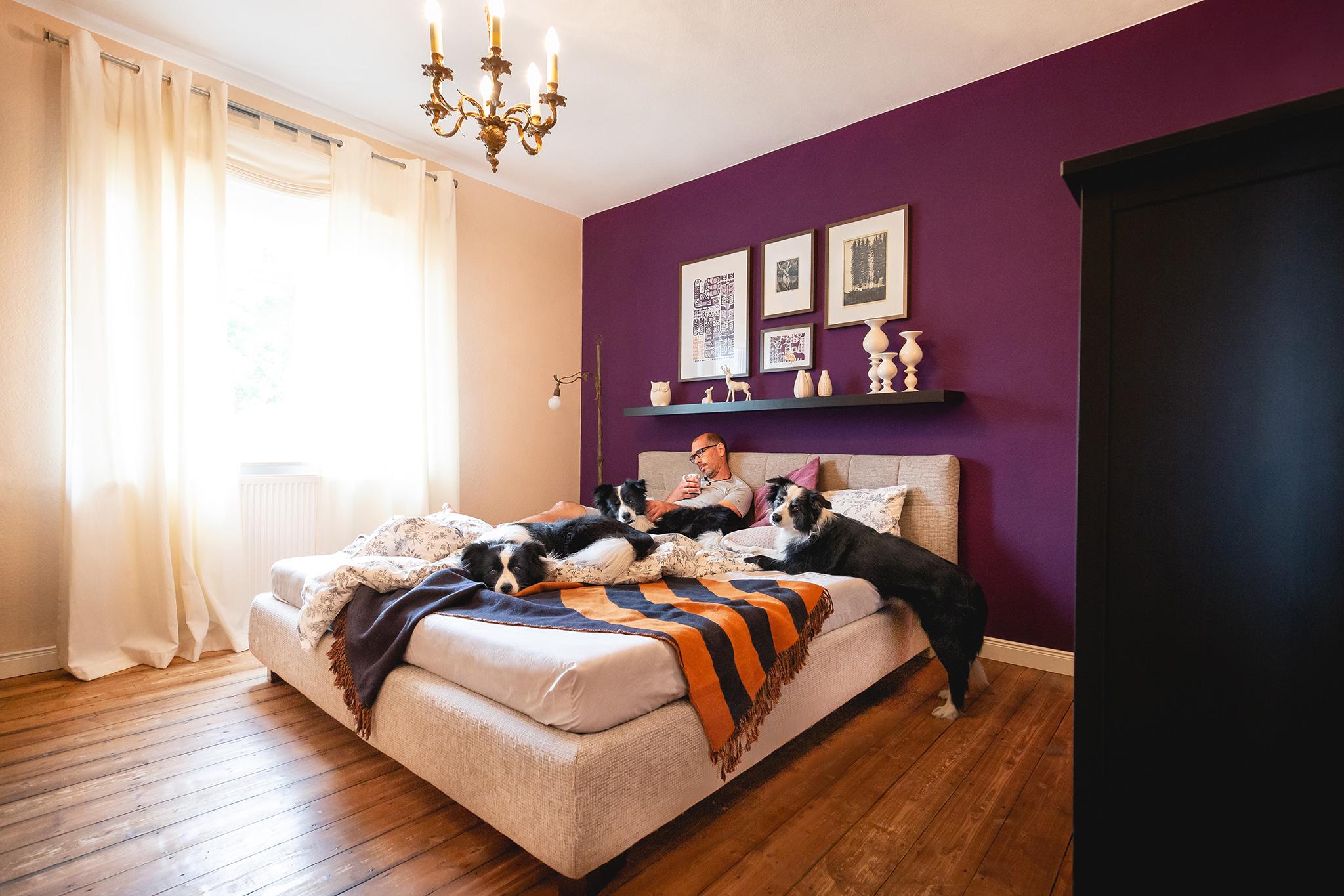 Border Collies im Schlafzimmer