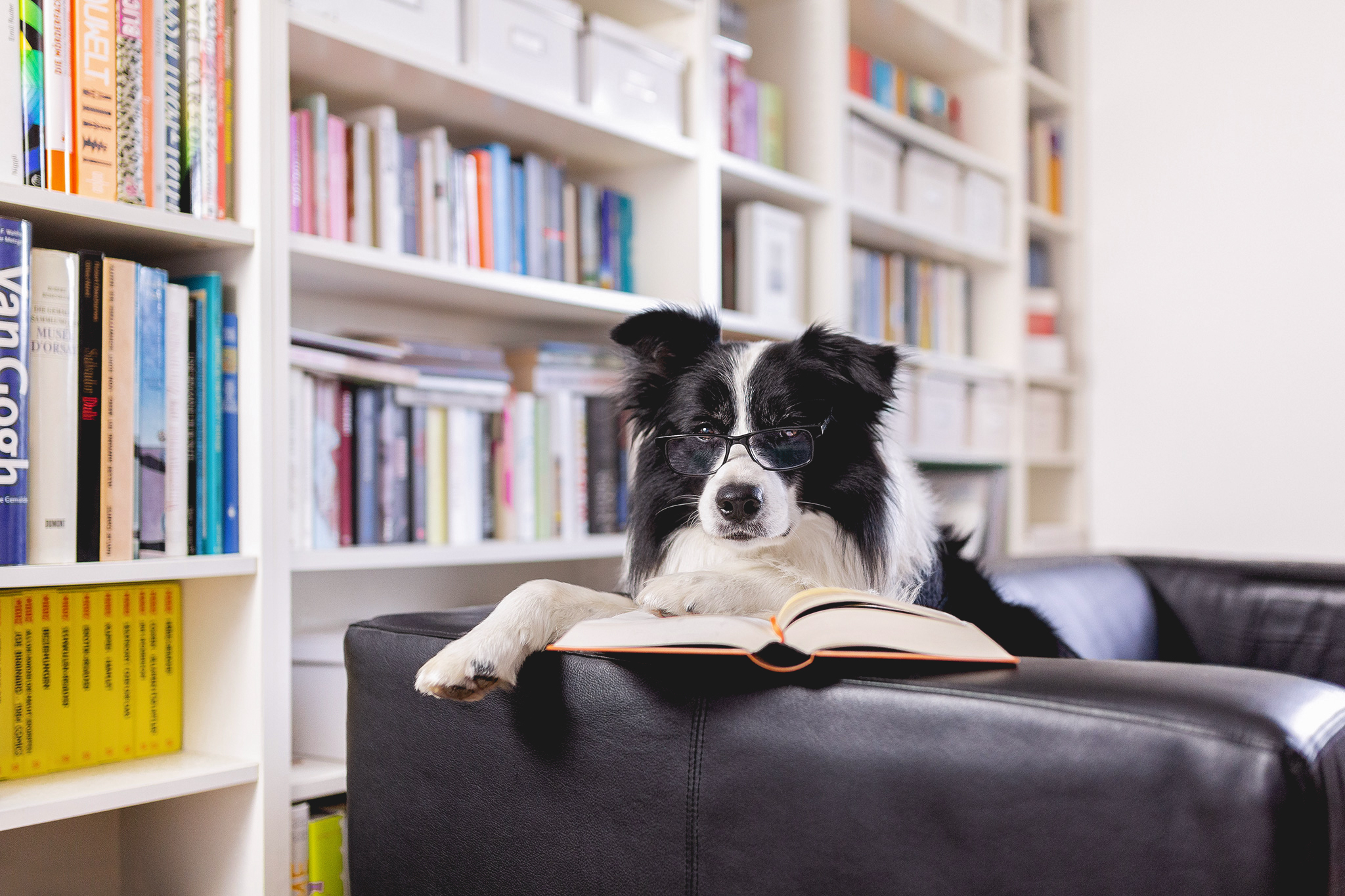 Hund mit Buch und Brille