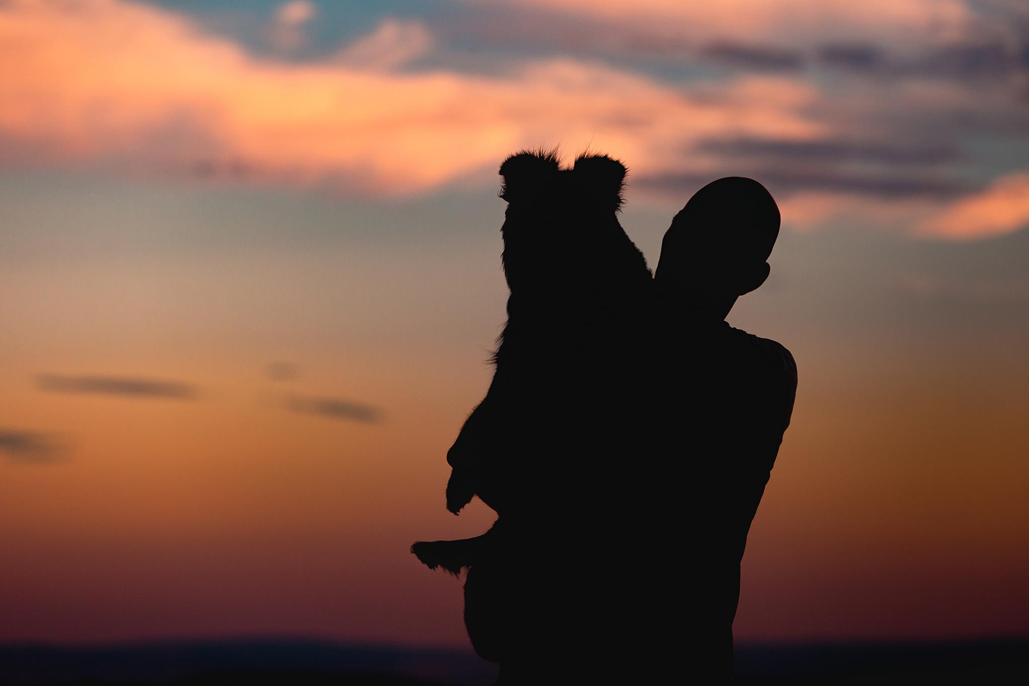 Mensch und Hund Silhouetten vor Abendhimmel