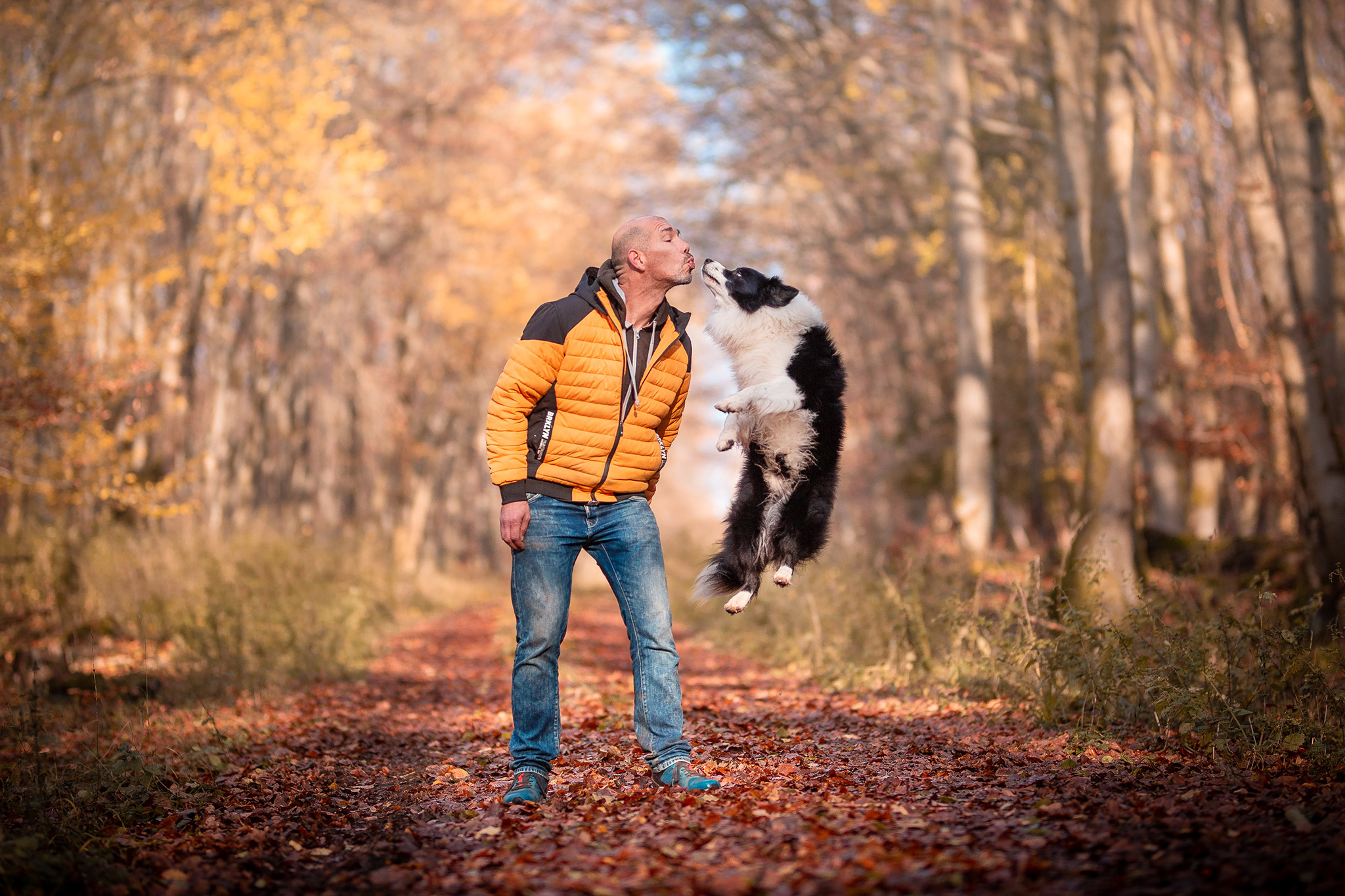 Mann mit springendem Border Collie