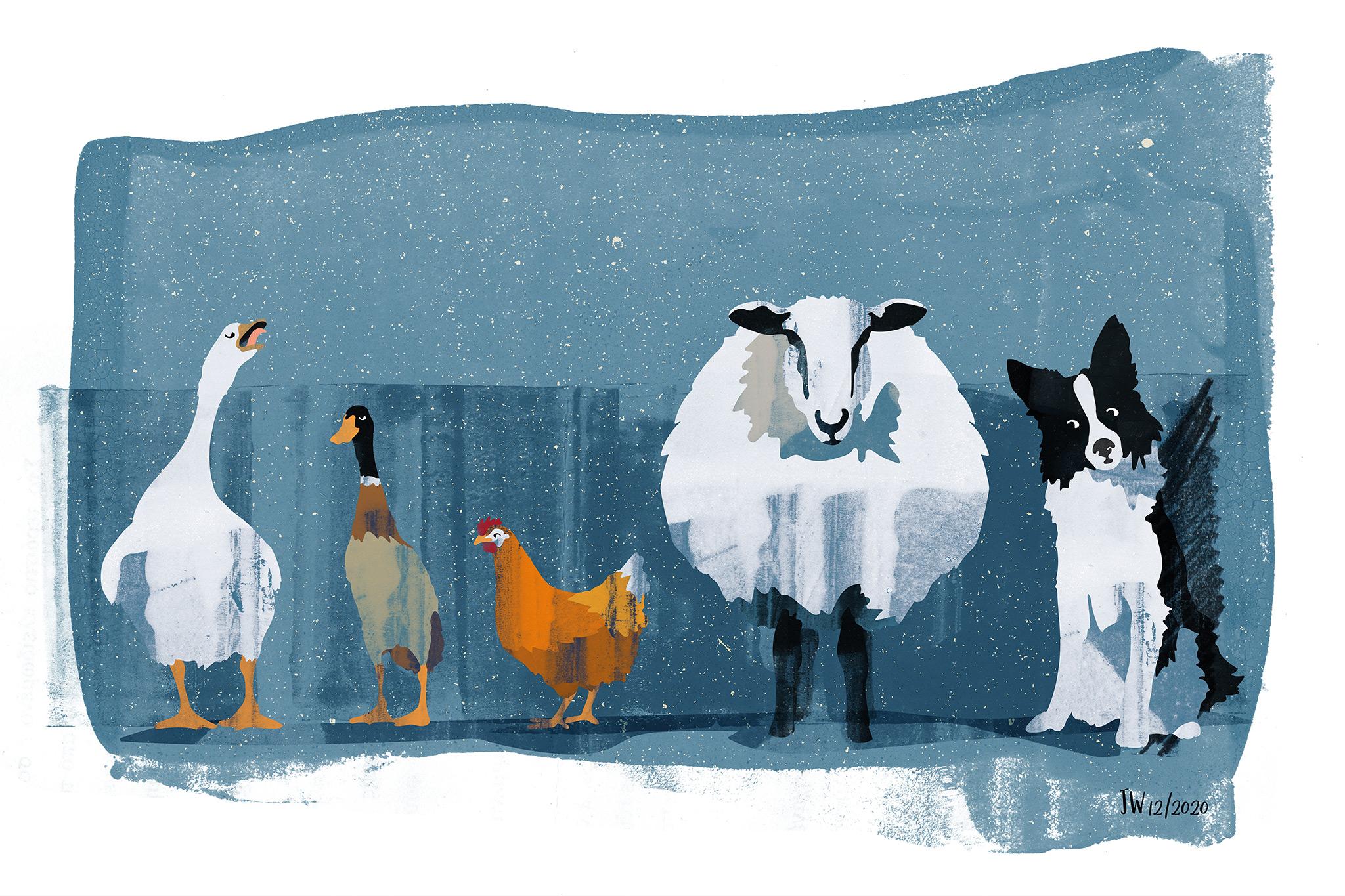 Border Collie Weihnachtsgeschichte, Illustration