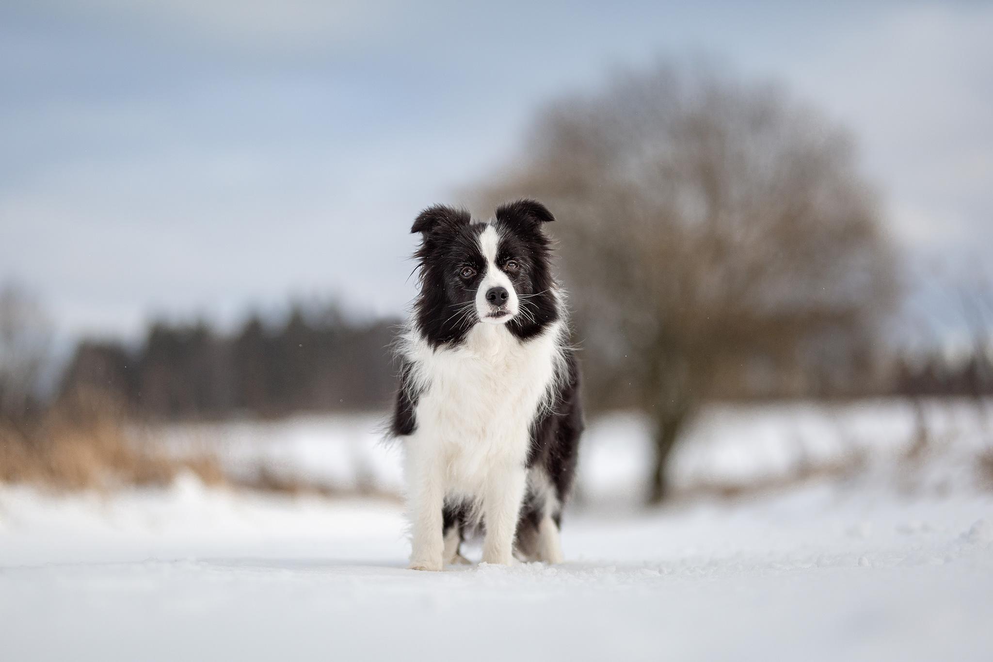 28|12|2020 – Schneespaziergang auf der Fuchskaute: Heidi